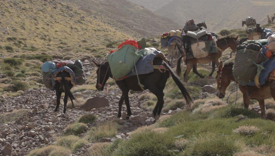 fotograma-amazigh-ralda-world (14)
